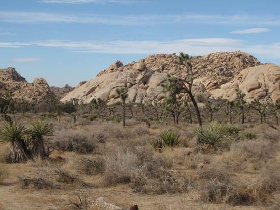 """""""Joshua Tree National Park"""""""