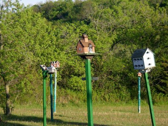 """Bird houses in a park near Picton"""