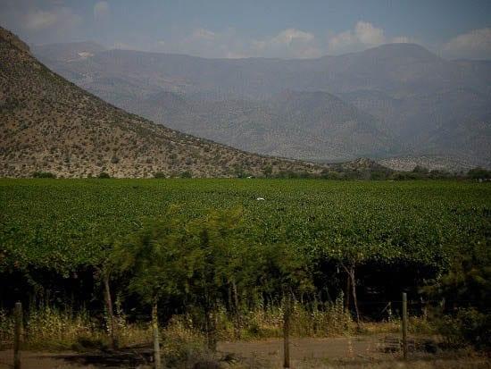 """Vineyards outside of Santiago"""
