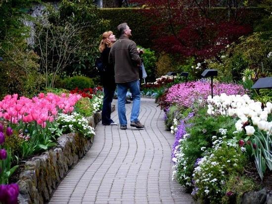 """""""Visitors admiring flowering trees"""""""
