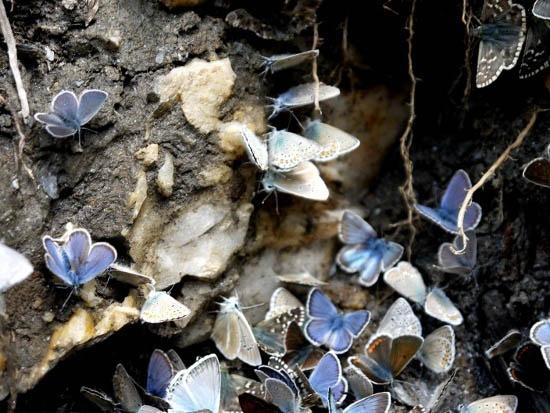"""Butterflies at a stream crossing"""