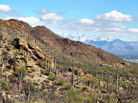 """The Sonoran Desert near Tucson"""