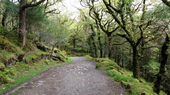 """Near the start of the Kerry Way, Ireland"""