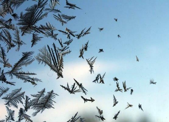 """""""Looks like birds to me"""""""