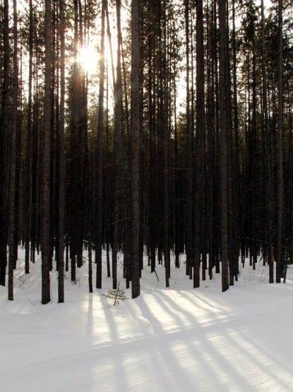 """""""Sun poking through the trees"""""""