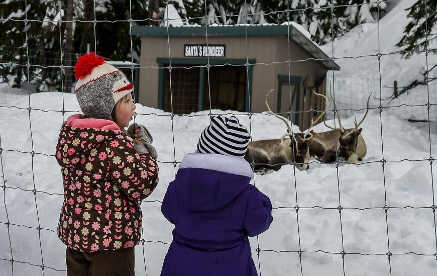 Kids admiring the reindeer