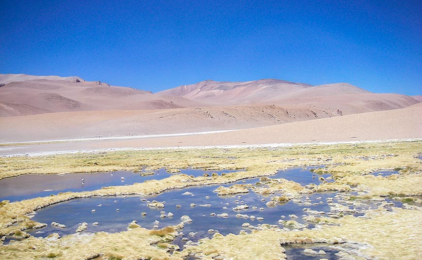 The Altiplano In Northern Chile