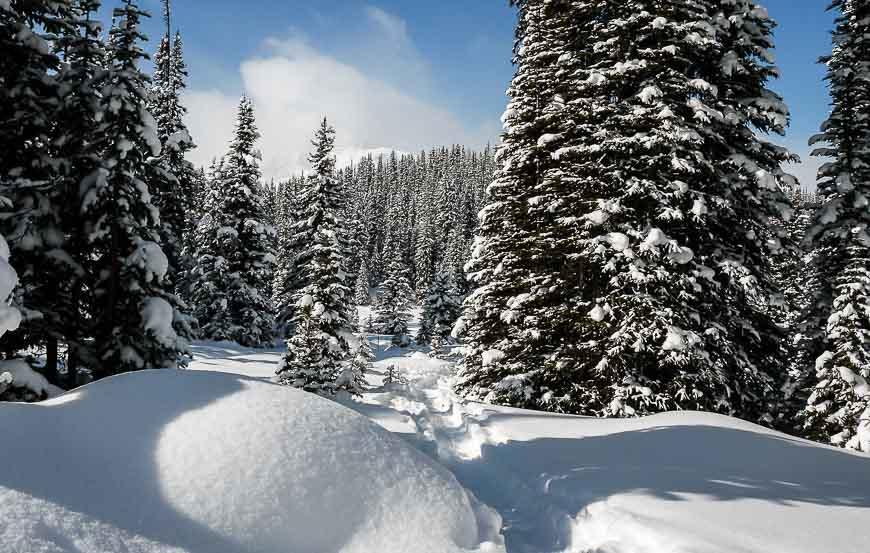 Following signs through deep snow