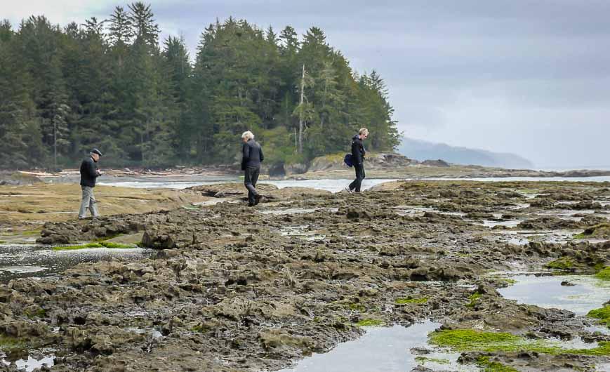 Exploring the tide pools