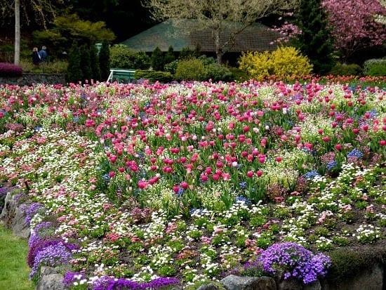 The Butchart Gardens: Big, Bold & Beautiful
