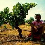 """""""Finding shade on the Via de la Plata - under a grape vine"""""""