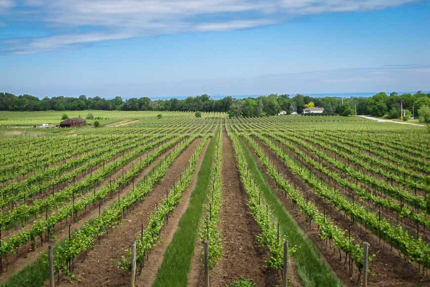 The Niagara Peninsula is dotted with vineyards