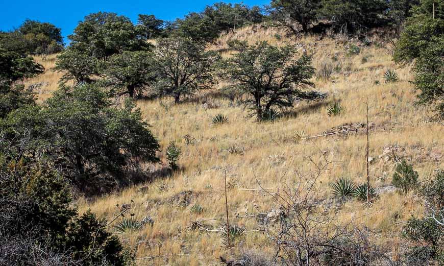 An Easy Hike In Ramsey Canyon In Southern Arizona Hike
