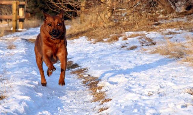 """My dog with three feet off the ground"""