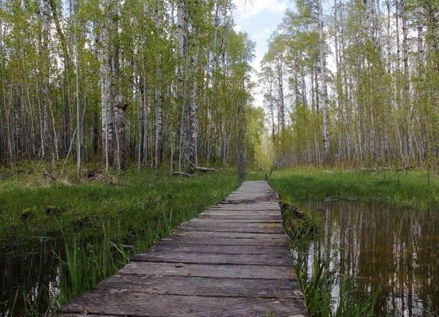 """Hiking in Elk Island National Park"""