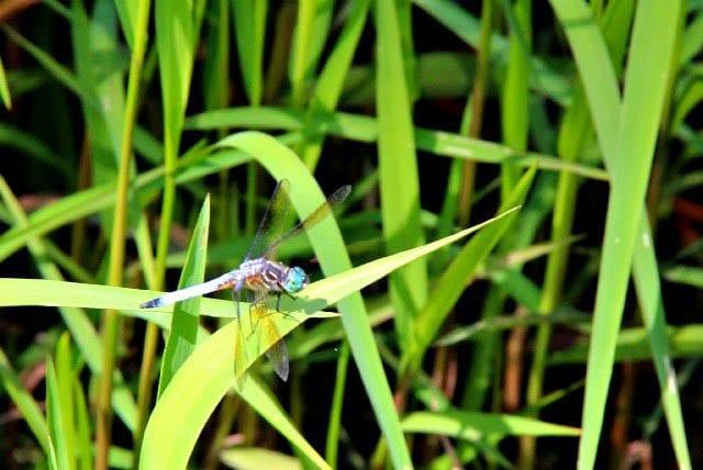 """Beautiful dragonfly"""