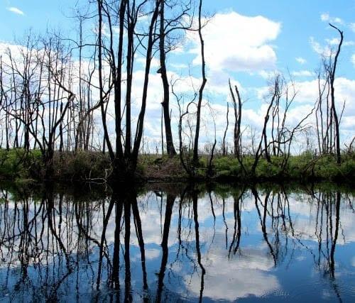 """Beautiful reflections in Okefenokee Swamp"""