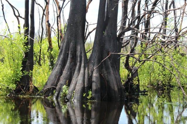 """Beautiful cypress trees"""