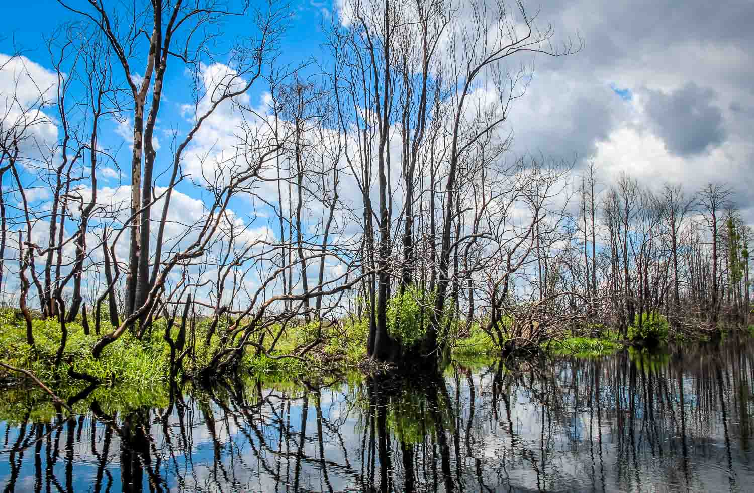 Beautiful reflections on in the waters of Okefenokee Swamp