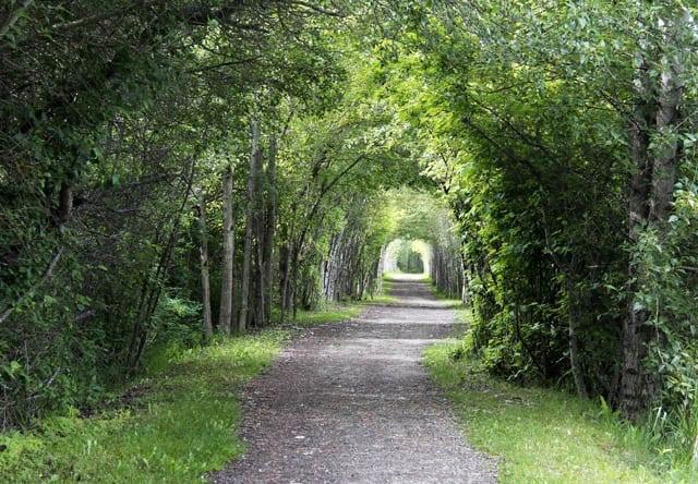 """Walking the nature trail along the shores of Shuswap Lake"""