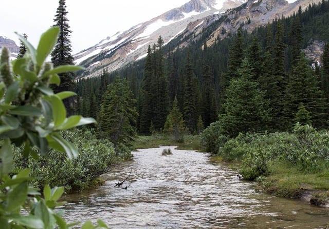 """""""Pretty stream close to the cabin"""""""