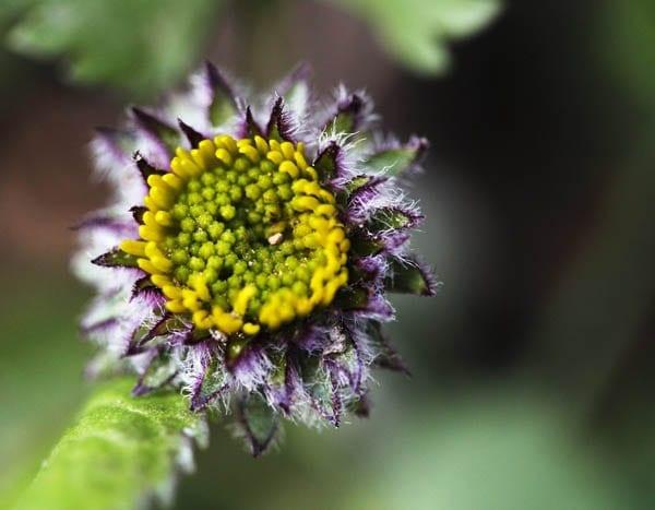 """Gorgeous purple wildflower"""