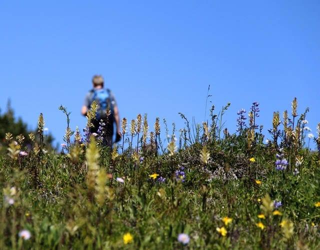 Rainbow Range 064 A World class Hike:The Rainbow Range in Tweedsmuir Provincial Park