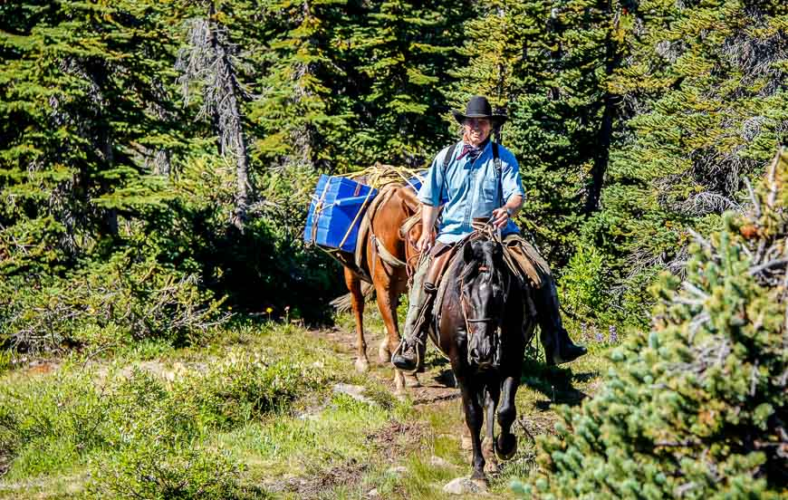 Horses used to resupply a camp further up in the Rainbow Range, Tweedsmuir Provincial Park