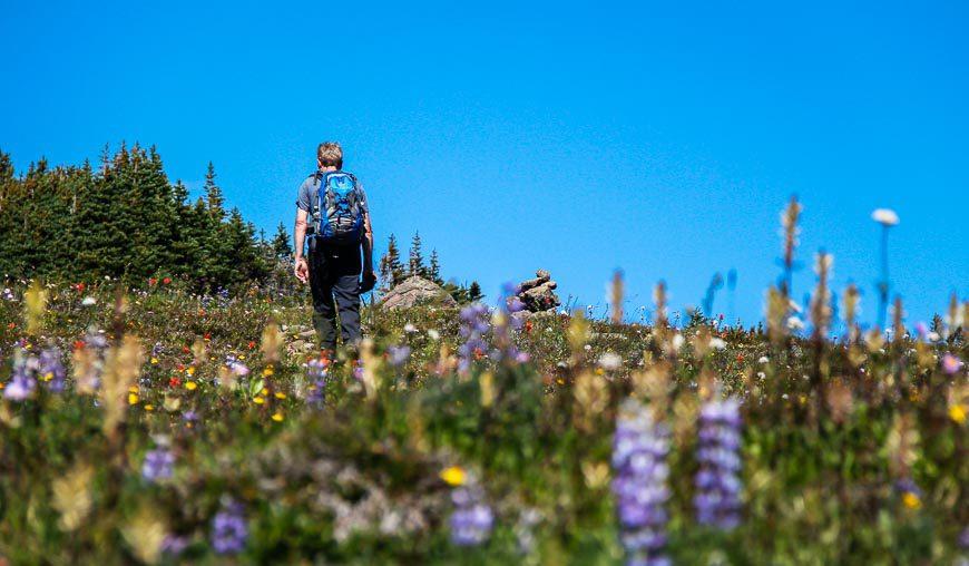 John walking through reams of wildflowers