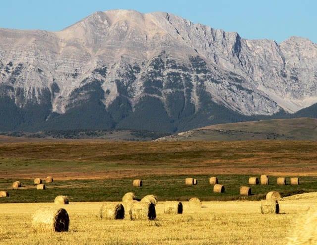 """It's haying season"""