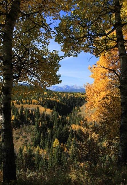 """""""Sheep River Valley Overlook"""""""