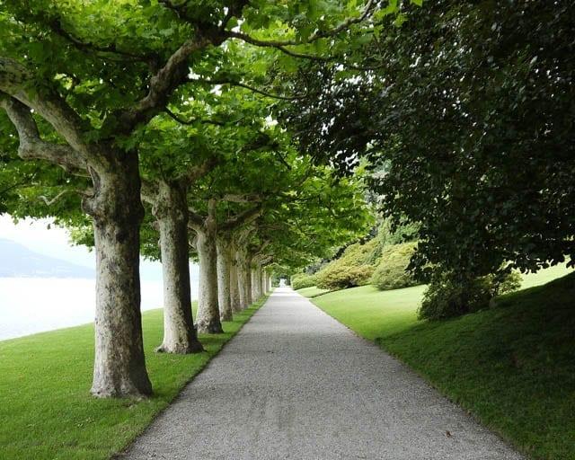 """Leading line of a path in the Gardens of Villa Melzi, Bellagio"""