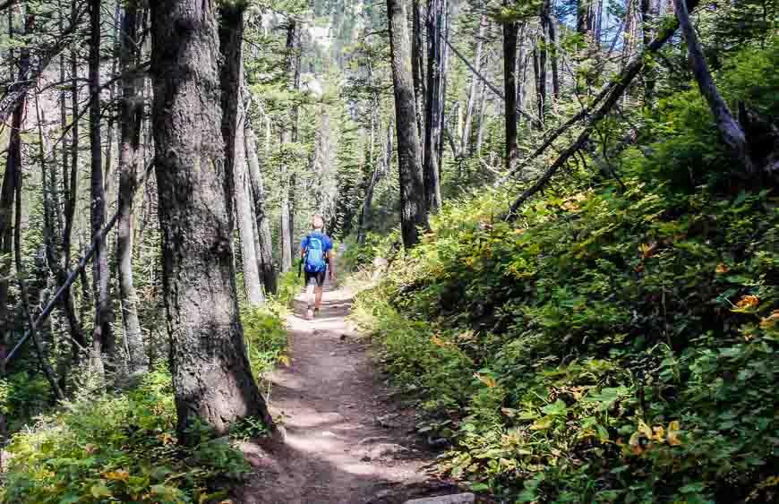The last seven kilometres take you through the woods