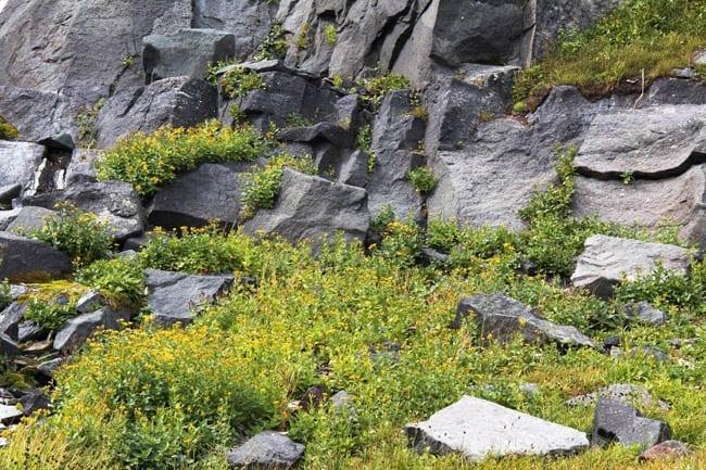"""Signs of life among all the rocks"""
