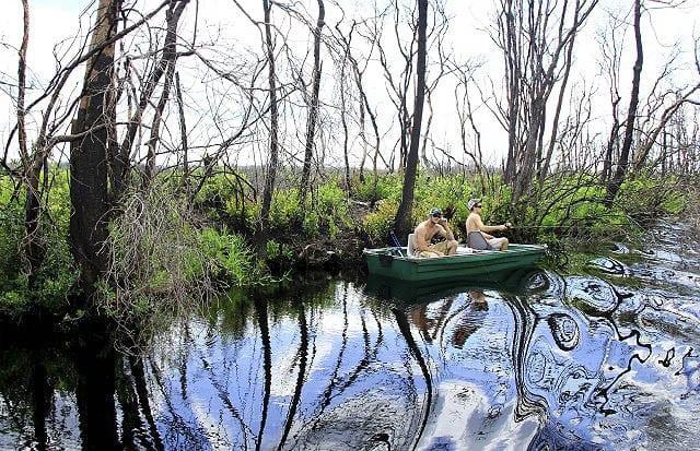 "'Fishing for crocodiles in Okefenokee Swamp"""