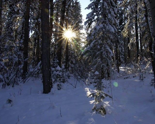 """Sun beams on the tree"""