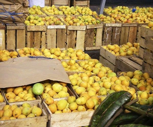 """Fresh mangoes galore"""