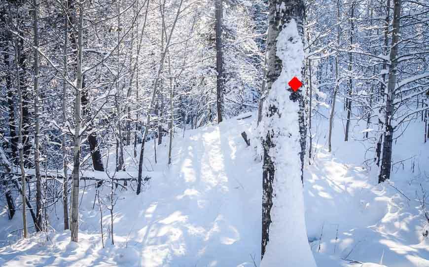 Snowshoeing in West Bragg Creek