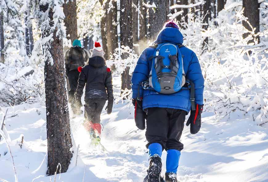 Snowshoeing the Ranger Summit Trail at West Bragg Creek