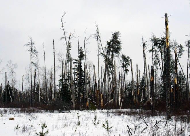 """Broken trees - evidence of the fierce 2007 windstorm"""