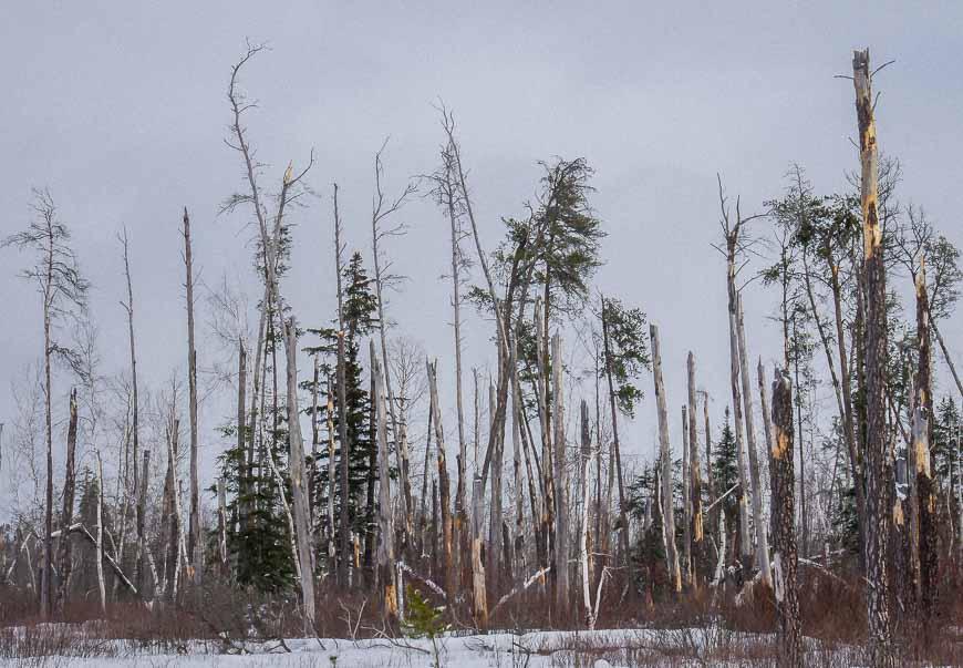 Broken trees - evidence of the fierce 2007 windstorm