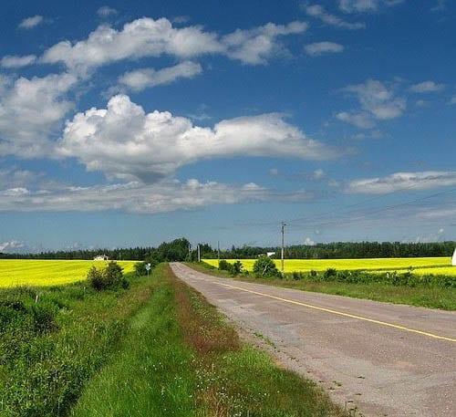 """""""Fields in flower along the back roads"""""""