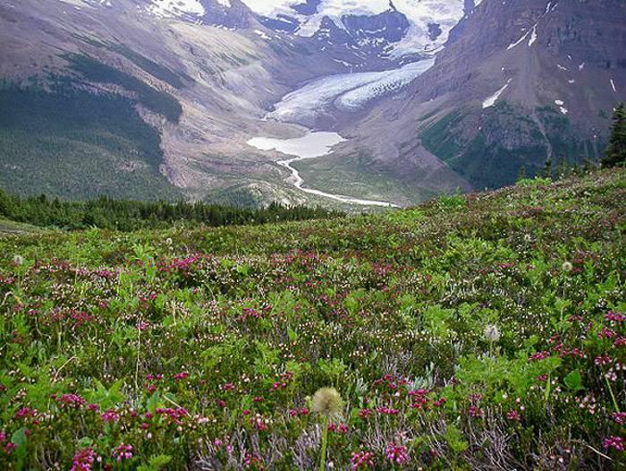 A wildflower filled view over towards Snowbird Pass