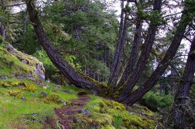 """""""Fantastic limbs on this tree"""""""