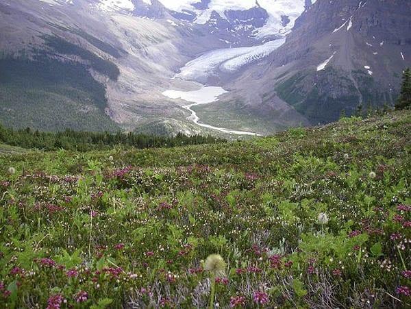 """""""A wildflower filled view over towards Snowbird Pass"""""""