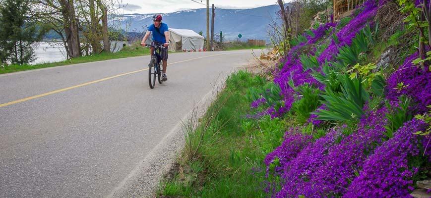 Biking past a fantastic blast of roadside colour