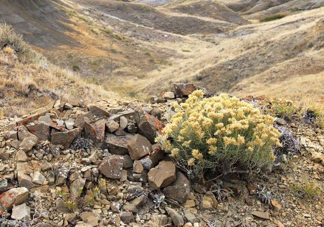 """Plants still thrive in the barren looking landscape"""