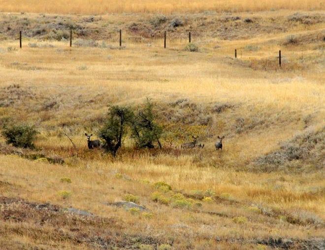 """""""The deer melt into the landscape"""""""