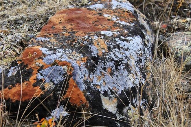"""Fantastic coloured lichens on rocks"""