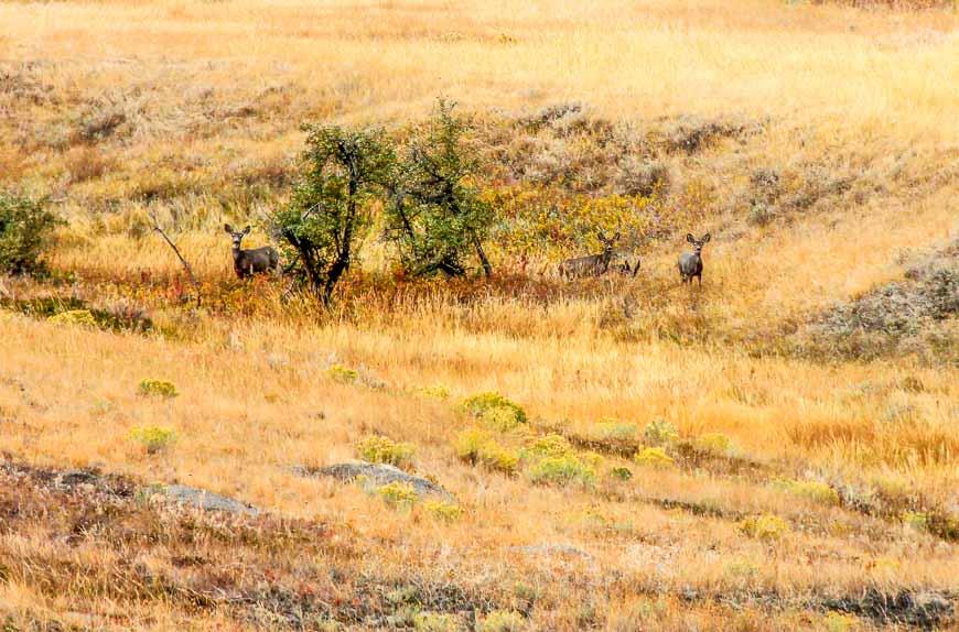 The deer melt into the landscape